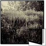 Overgrown Field Posters by Ewa Zauscinska