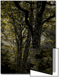 Central Park, no. 3 Prints by Katherine Sanderson