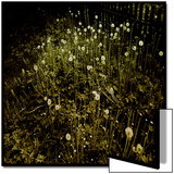 Dandelion Patch by Fence Prints by Ewa Zauscinska