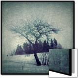 Lone Tree Posters by Ewa Zauscinska