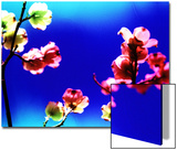 Flower Blossoms Prints by Aaron Farrington