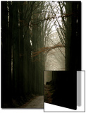Foggy Path with Trees Prints by Guillaume Carels
