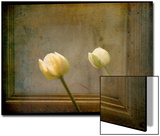 White Tulip against Framed Mirror Posters by Mia Friedrich