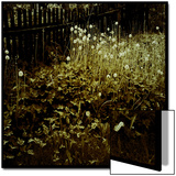 Dandelion Patch along Border Print by Ewa Zauscinska