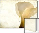 Detail of Calla Lily Poster van Mia Friedrich
