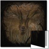 Field Hare Kunstdrucke von Tim Kahane