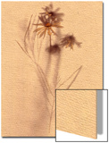 Wilted Flower and Stem Sketch Print by Robert Cattan