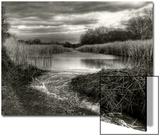 Reeds in Winter Plakater av Stephen Arens