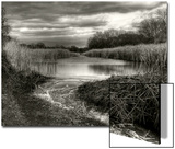 Reeds in Winter Poster von Stephen Arens