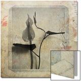 Liseron Copie Prints by Nathalie Diacci