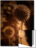 Sepia Dandelions Posters by Robert Cattan