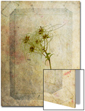Clematis Copie Kunst von Nathalie Diacci