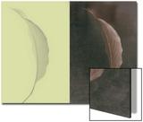 Contrasting Magnolia Leaves Poster von Robert Cattan