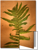 Fern Leaves Prints by Robert Cattan