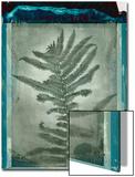 Negative Fern Leaves Prints by Robert Cattan