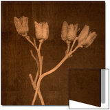 Four Dried Blossoms Prints by Robert Cattan