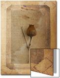 Silene Copie Print by Nathalie Diacci