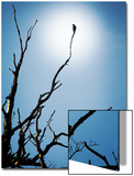 Bird Perched on Branches Reaching to the Sky Print by Tommy Martin