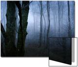 Moss Covered Trees in Dense Dog Plakater av Tommy Martin