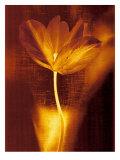 Bronze Tulip I Giclee Print by John Butler