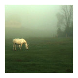 White Horses Field II Prints by Rick Schimidt