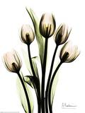 Crystal Flowers, Tulip Bouquet Prints by Albert Koetsier