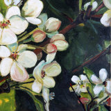 Blossom Rhapsody III Prints by Mary Mclorn Valle
