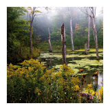 A Misty Morning I Prints by Rick Schimidt