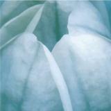 Tulip Trio III Posters by Gabriel Scott