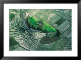 Terraced Rice Fields, Bali Prints by Yann Arthus-Bertrand