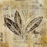 Botanical Sketchbook I Posters par Dennis Carney