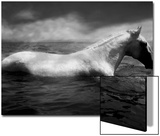 White Horse Swimming Prints by Tim Lynch