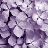 Tony Koukos - Bunch of Flowers IV - Poster