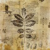 Botanical Sketchbook II Affiches par Dennis Carney