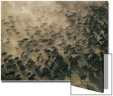 An Aerial View of a Herd of Wildebeests Prints by Chris Johns