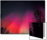 Curtains of Northern Lights above Fairbanks, Alaska, USA Posters by Hugh Rose