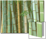 Bamboo Forest, Kyoto, Japan Posters by Rob Tilley