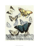 Butterfly Habitat II Premium Giclee Print by Jennifer Goldberger