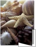 Tropical Shells Plakater av Michele Westmorland
