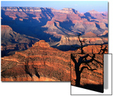 Grand Canyon from South Rim Near Yavapai Point, Grand Canyon National Park, Arizona Poster von David Tomlinson