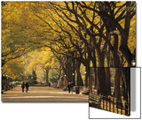 Central Park, New York City, Ny, USA Posters by Walter Bibikow