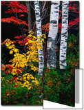Fall Color, Old Forge Area, Adirondack Mountains, NY Prints by Jim Schwabel