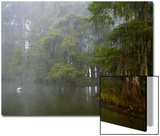 Great Egret Reflected in Foggy Cypress Swamp, Lake Martin, Louisiana, USA Poster by Arthur Morris
