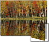 Fall Foliage and Birch Reflections, Hiawatha National Forest, Michigan, USA Posters by Claudia Adams