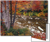 Swift River with Aspen and Maple Trees in the White Mountains, New Hampshire, USA Poster by Darrell Gulin