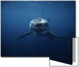 Gerard Soury - Great White Shark, Swimming, South Australia Umění