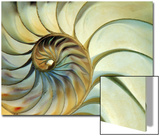 Close-up of Nautilus Shell Spirals Prints by Ellen Kamp