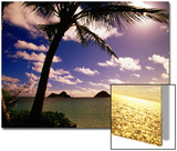 Palm Trees on the Beach at Sunset, Lanikai, U.S.A. 高品質プリント : アン・セシル