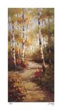 Forest Walkway Giclee Print by Stephen Douglas