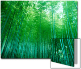 Bamboo Forest, Sagano, Kyoto, Japan Plakát
